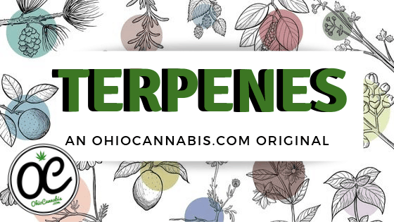Terpenes Explainer Graphic